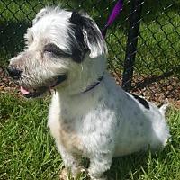 Adopt A Pet :: Rambo*F* - Sanford, FL