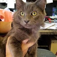 Adopt A Pet :: Neffreti - Fort Madison, IA