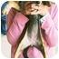 Photo 3 - Dachshund Mix Puppy for adoption in Lexington, Missouri - Patsy