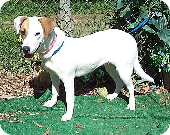 Hound (Unknown Type) Mix Dog for adoption in Marietta, Georgia - CLASSY