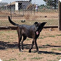 Adopt A Pet :: Coco - Las Cruces, NM