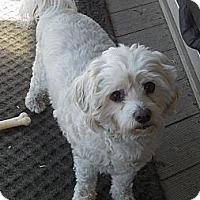 Adopt A Pet :: Krishna - Cotati, CA