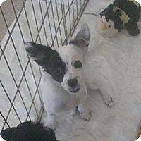 Adopt A Pet :: darla - Phoenix, AZ