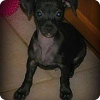 Adopt A Pet :: Brody - Silsbee, TX