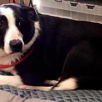 Adopt A Pet :: Marlo - Amarillo, TX