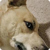 Adopt A Pet :: Brady - Olympia, WA