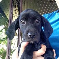 Adopt A Pet :: Peanut - Oviedo, FL