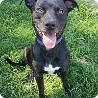 Adopt A Pet :: Dakota - Youngsville, NC