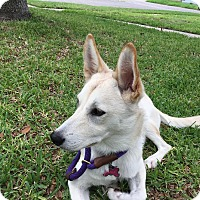 Adopt A Pet :: Holly-Referral - Dripping Springs, TX