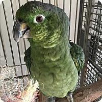 Adopt A Pet :: Escobar - Punta Gorda, FL