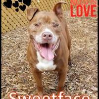 Adopt A Pet :: Sweetface - Cincinnati, OH