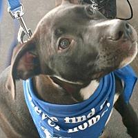 Adopt A Pet :: Bojo - Hockessin, DE