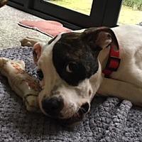 Adopt A Pet :: Chloe (786) 461-8854 - Miami, FL