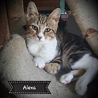 Adopt A Pet :: Alexa - South Bend, IN