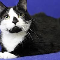 Adopt A Pet :: Bermuda - Blackwood, NJ