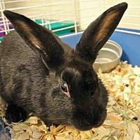 Adopt A Pet :: LEANNE - Fort Wayne, IN