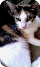 Calico Cat for adoption in Phoenix, Arizona - Leah