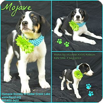 Hound (Unknown Type) Mix Dog for adoption in Plano, Texas - Mojave