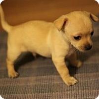 Adopt A Pet :: Diego - Seattle, WA