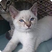 Adopt A Pet :: Winter - Lantana, FL