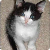 Adopt A Pet :: Rame - Richmond, VA