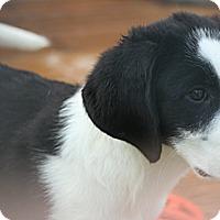 Adopt A Pet :: Geoffrey - Morgantown, WV