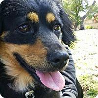 Adopt A Pet :: Mama & Puppies - Whittier, CA