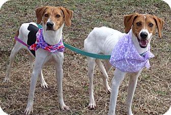 Hound (Unknown Type)/Beagle Mix Dog for adoption in Port St. Joe, Florida - Katie & Lora