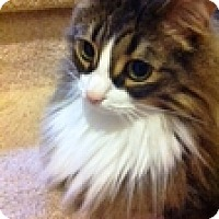 Adopt A Pet :: Maybeline - Vancouver, BC