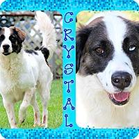 Adopt A Pet :: Crystal - Tampa, FL
