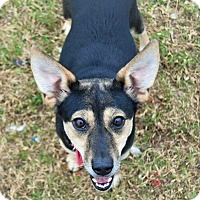 Adopt A Pet :: Walnut - Hamburg, PA