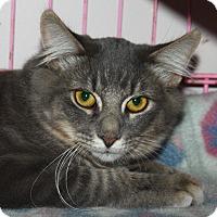 Adopt A Pet :: Thistle - North Branford, CT