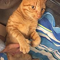Adopt A Pet :: Benny - Lithia, FL