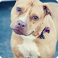 Adopt A Pet :: Darling - Gainesville, FL