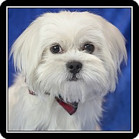 Adopt A Pet :: Kirby - Covina, CA