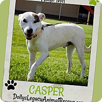 Adopt A Pet :: CASPER - Lincoln, NE