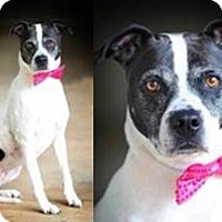 Adopt A Pet :: Luna - Greenville, SC