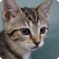 Adopt A Pet :: Davida - Sarasota, FL