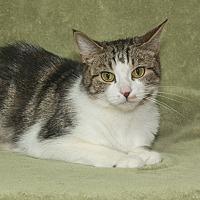 Adopt A Pet :: Ava - Elmwood Park, NJ