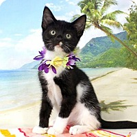 Adopt A Pet :: Kreature - Harrisonburg, VA