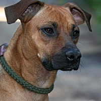 Adopt A Pet :: Marley - New City, NY