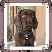 Adopt A Pet :: Marshall - Santa Barbara, CA