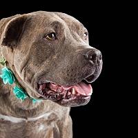 Adopt A Pet :: Pickles - Lodi, CA