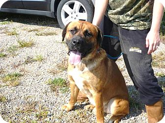 Mastiff Mix Dog for adoption in Zanesville, Ohio - # 387-12  ADOPTED!