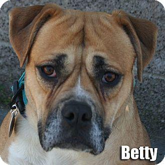 Boxer/Labrador Retriever Mix Dog for adoption in Encino, California - Betty