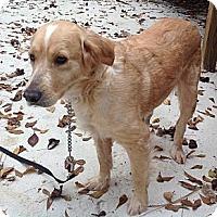Adopt A Pet :: Sara - New Canaan, CT