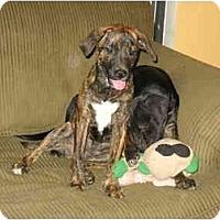 Adopt A Pet :: Buttons - Glastonbury, CT
