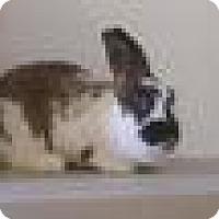 Adopt A Pet :: Layla - Paramount, CA