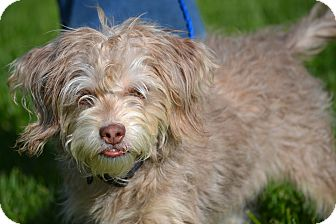 Terrier (Unknown Type, Small) Mix Dog for adoption in Pikeville, Maryland - Charlie