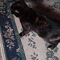 Adopt A Pet :: Zoe - Covington, PA